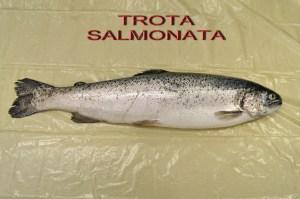 _SAM1281 TROTA SALMONATA